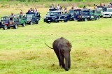 Gathering of Elephants or a gathering of Jeeps!