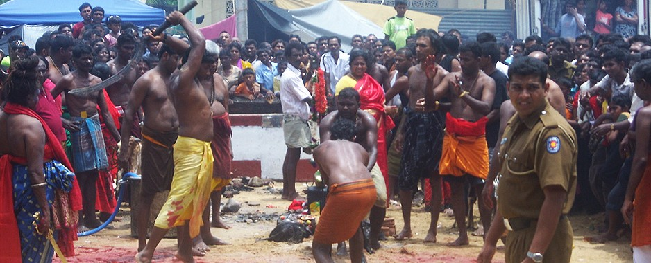Rights activists welcome SC decision on animal sacrifices