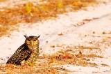 Quest begins for best bird photographers