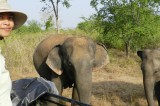Coming back home for  the love of elephants