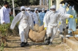 Bird flu outbreak in India caused by strain humans can contract: OIE