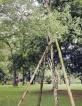 JR's sandalwood tree at Botanical Gardens survives attack
