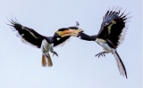 'Birding with the 3rd eye'