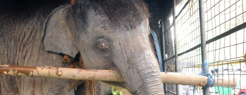 Two more elephants rescued, one badly injured
