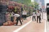 Wall mounted plants at Temple Trees to be relocated