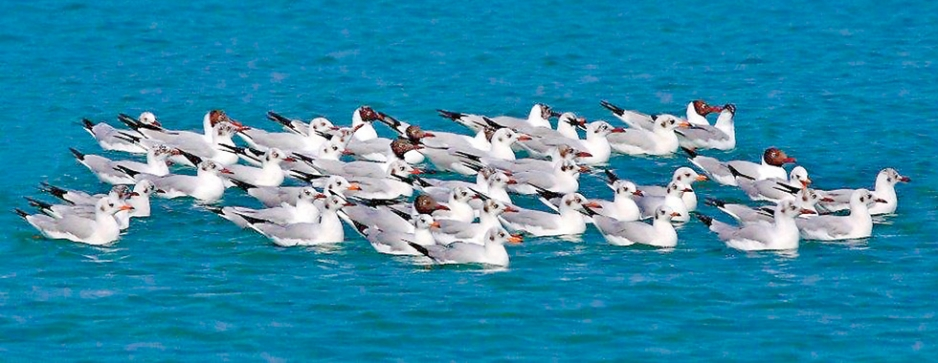 Birding Tours to Mannar with Cinnamon Nature Trails