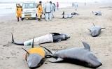 Mass beaching fuels 'unscientif ic' Japan quake fears
