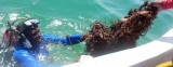 Kalpitiya fishermen ride roughshod over beautiful corals