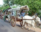 With faith in their hearts and their bullock carts, devotees make trip to Madu