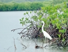 Negombo Lagoon: Second to  none in its flora and fauna