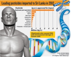 Glyphosate ban mired in confusion
