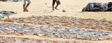 Fishing 'war'  in Negombo