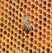 Honey-based mead may curb antibiotic resistance, say makers