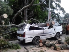N'Eliya powerless after winds blow ancient tree onto electricity pylons
