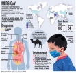 Sri Lanka on 'Red Alert' for MERS virus -Health Ministry
