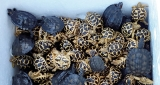 Tortoise smuggling racket stretches to IndiaBy Malaka Rodrigo