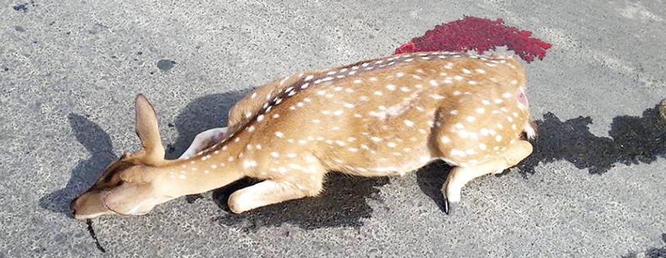 Innocent animals die because we speed through their habitat