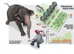 Fences don't work for elephants, say villagers but minister wants more in short term