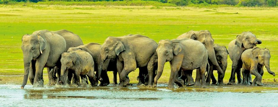 UK's 'Sunday Times' picks Sri Lanka as 'Destination of the Year'