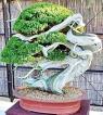 Bonsai: Living images
