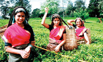 """marketing mix for sri lankan tea Dec 4, 2017 misconceptions about production and marketing of ceylon tea, this paper attempts to analyse the tea export revenues of sri lanka, value addition by """"a successful branding strategy founded on a 'unique selling point' to capture a market, is diametrically opposed to the concept of cost reduction with a."""