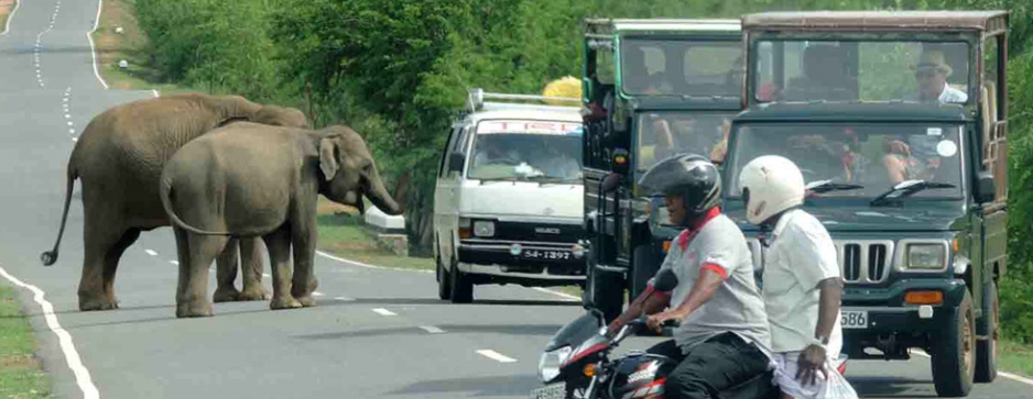 An elephantine problem