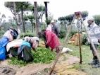 Plantation wage agreement on the horizon