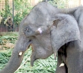 Will baby jumbos snatched from the wild find justice?