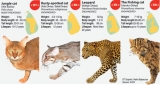 International wildcat  experts to meet in Sri Lanka