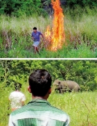 Four billion rupees in Budget for human-elephant conflict
