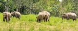 Human elephant conflict: Bunds and trenches could form a viable solution