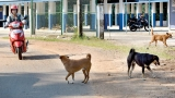 22 rabies death cause for alarm: Health Ministry