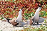 See the seabirds