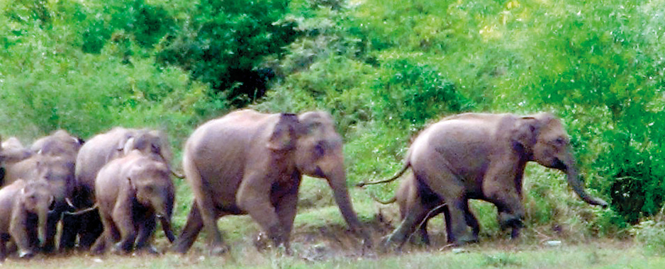 Despite efforts of the WLD the human-elephant conflict continues to take its toll