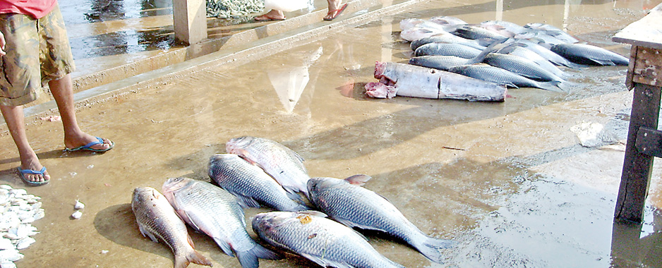Chilaw fish market in a state of neglect
