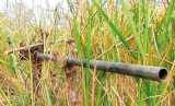 Trap guns taking  heavy toll on human and animal life