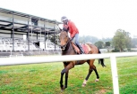 Record sum on offer as prize money at N' Eliya horse races on March 20