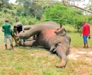 Another majestic elephant felled