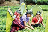 Restructuring the country's plantation sector and restoring its former glory