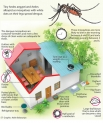 Taking the sting off dengue