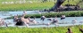 Photo focus: Anawilundawa wetlands under threat