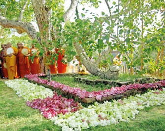 Lanka holds sole living link to Buddha's enlightenment