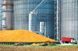 Genetically engineered crops are safe, US analysis finds