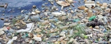 Negombo's endemic natural resources vital for its development: Residents