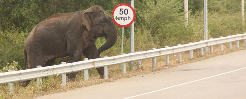 16 elephants, eight people killed as human-elephant  conflict rages  in Hambantota