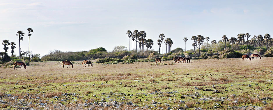 Billion-rupee eco-tourism hotel  project in Delft Island falls apart