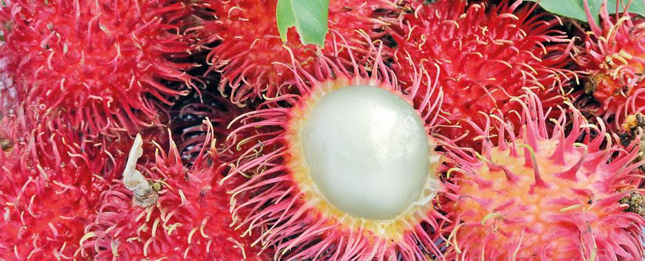 It's July, the time for juicy Rambutan