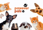 Pawever Pals : Supporting the underdog