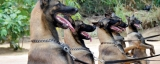 Four-legged juniors set for deadly mission