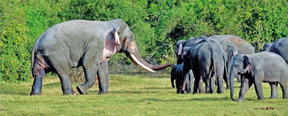 Living next door to elephants